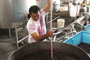 Organically growing First Drop Wines